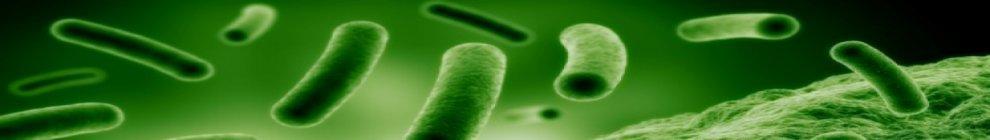 bacteria-3